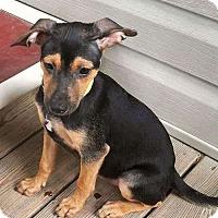 Adopt A Pet :: Naomi - Sudbury, MA