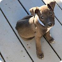 Adopt A Pet :: Bama - Sacramento, CA