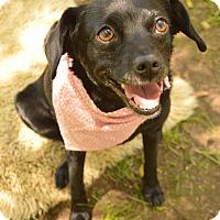 Adopt A Pet :: Maggie - Auburn, CA