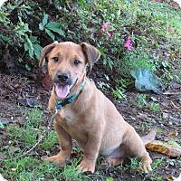 Adopt A Pet :: BRITT - Hartford, CT