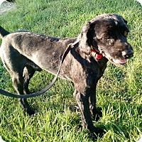 Adopt A Pet :: Jack - Macomb, IL