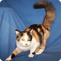 Adopt A Pet :: Tatiana - Colorado Springs, CO