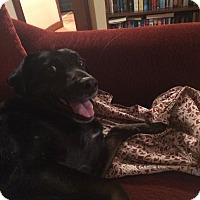 Adopt A Pet :: Pup - Providence, RI