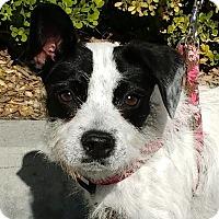 Adopt A Pet :: Dana - Buena Park, CA