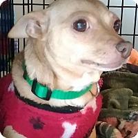 Adopt A Pet :: Pebbles - Newnan, GA