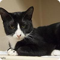 Adopt A Pet :: Succotash - Lincolnton, NC
