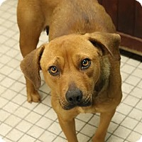 Adopt A Pet :: Stella - Camden, DE
