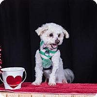 Adopt A Pet :: Jasper - Placentia, CA