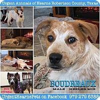 Adopt A Pet :: Boudreaux - Hearne, TX