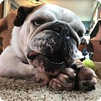Adopt A Pet :: Hope - St. Cloud, MN