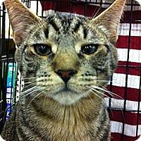 Adopt A Pet :: Tim - Pittstown, NJ