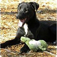 Adopt A Pet :: ELVIS - Hagerstown, MD
