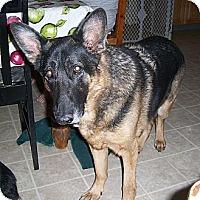 Adopt A Pet :: Murphy - El Paso, TX