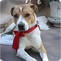 Adopt A Pet :: BETSY !! - san diego, CA