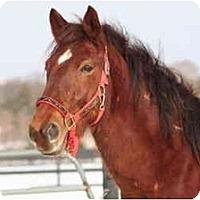 Adopt A Pet :: Duke - West Falls, NY