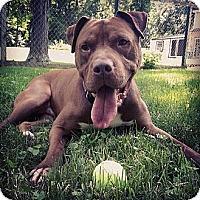 Adopt A Pet :: Roscoe - Vernon Hills, IL