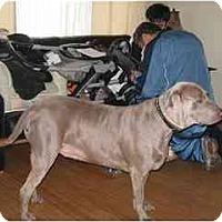 Adopt A Pet :: Denny - Attica, NY