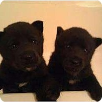 Adopt A Pet :: Jill - Bakersfield, CA