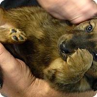 Adopt A Pet :: Calvin - Elk River, MN