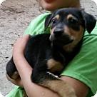 Adopt A Pet :: Grimlock (Transformer pups)