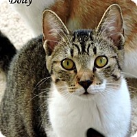 Adopt A Pet :: Dolly - McKinney, TX