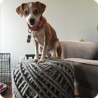 Adopt A Pet :: Dakota Fanning - Jersey City, NJ
