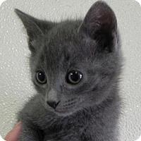 Adopt A Pet :: Candy's Dove - Fresno, CA