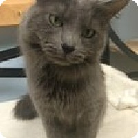 Adopt A Pet :: Trent - McHenry, IL