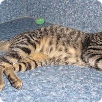 Adopt A Pet :: Ace - Harrisburg, NC
