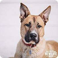 Adopt A Pet :: Hemi - Portland, OR