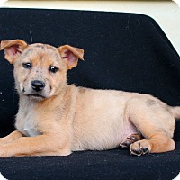 Adopt A Pet :: Sunkist - Los Angeles, CA