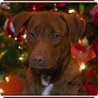 Adopt A Pet :: Auggie - Dixon, KY