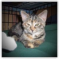 Adopt A Pet :: ADDIE - Medford, WI
