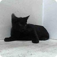 Adopt A Pet :: A367815 - Orlando, FL