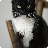 Adopt A Pet :: Bee160608 - Atlanta, GA