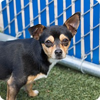Adopt A Pet :: Duke - Chula Vista, CA