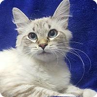 Adopt A Pet :: Pepper - Colorado Springs, CO