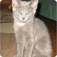 Adopt A Pet :: Dennis - Acme, PA