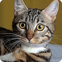 Adopt A Pet :: Norah - Irvine, CA