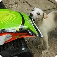 Adopt A Pet :: Lizzie - Antioch, IL