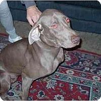 Adopt A Pet :: Bones - Attica, NY