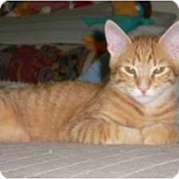 Adopt A Pet :: Bravo - Brea, CA