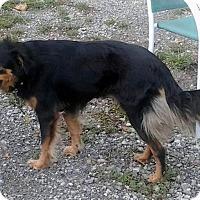 Adopt A Pet :: Sunny - Jacksboro, TN