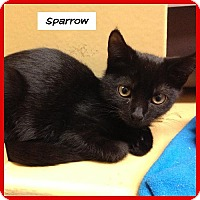 Adopt A Pet :: Sparrow - Miami, FL
