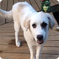 Adopt A Pet :: Rex  Adopted - Tulsa, OK