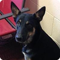 Adopt A Pet :: Bastrop - Dripping Springs, TX