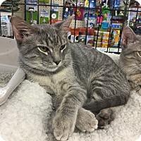 Adopt A Pet :: Birdie - Gilbert, AZ