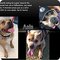 Adopt A Pet :: Asia - San Diego, CA