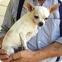 Adopt A Pet :: Rio - Mesa, AZ