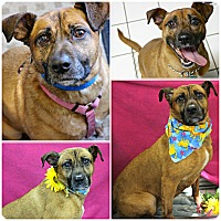 Adopt A Pet :: Nala - Forked River, NJ